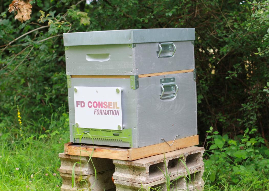 1 ère hausse pour la ruche FD Conseil Formation