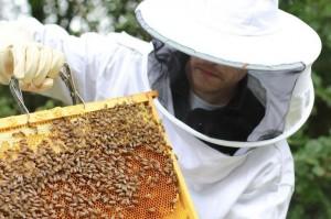 démo abeille