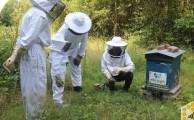 Découverte du monde apicole