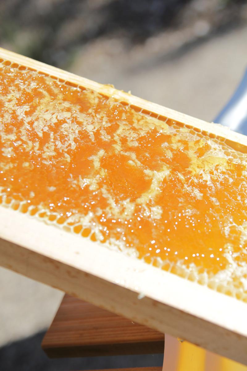 Récolte pour la ruche FD Conseil Formation