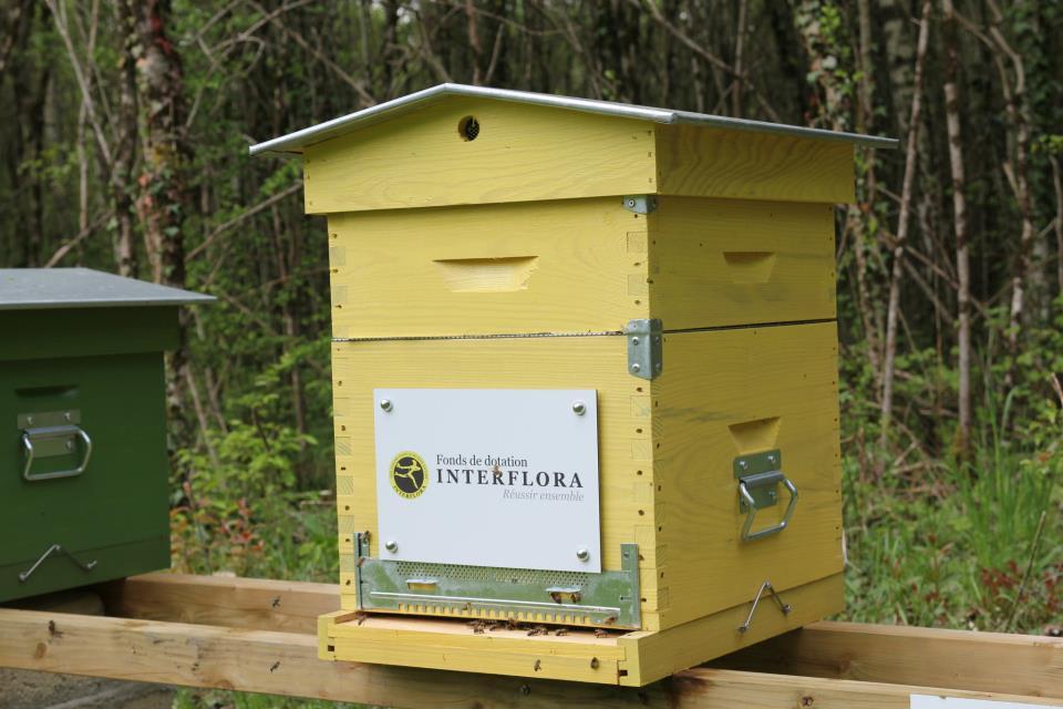 1 ère hausse pour la ruche Interflora