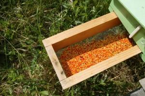 trappe pollen