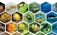 Le livret INPN/ONB sur les espèces françaises (V.2020)